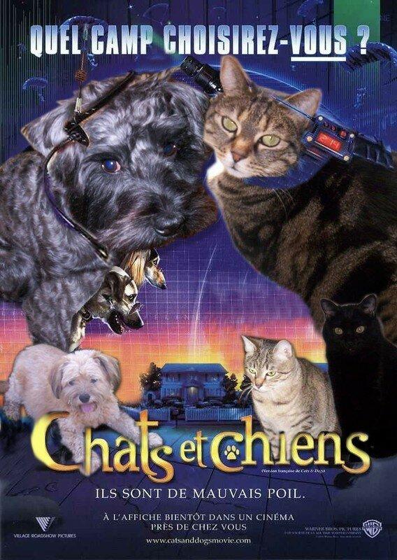 Valerie chat et chiens