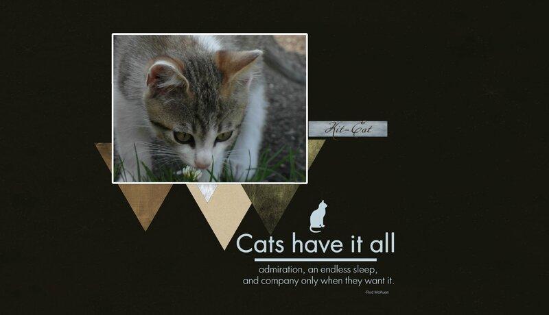 kit cat1