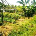 Chiang Maï Cooking farm