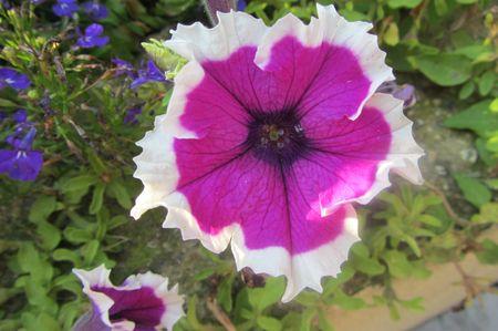 Fleurs Aout 2013 014