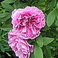 thérèse bugnet (jardin)