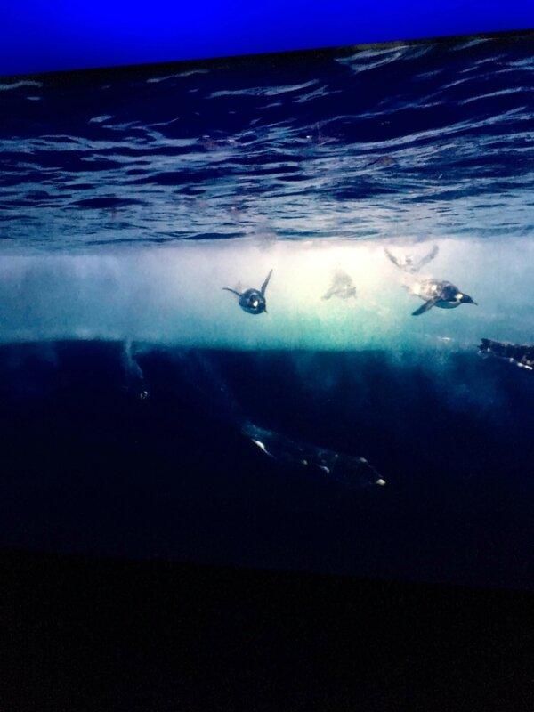 2-musee-des-confluences-exposition-antartica-lyon