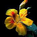 Couleurs de fleurs (47)