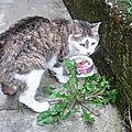 [grif' informe] mon chat souffre d'hyperthyroïdie! pissenlit.