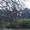 La pluie sur les branches
