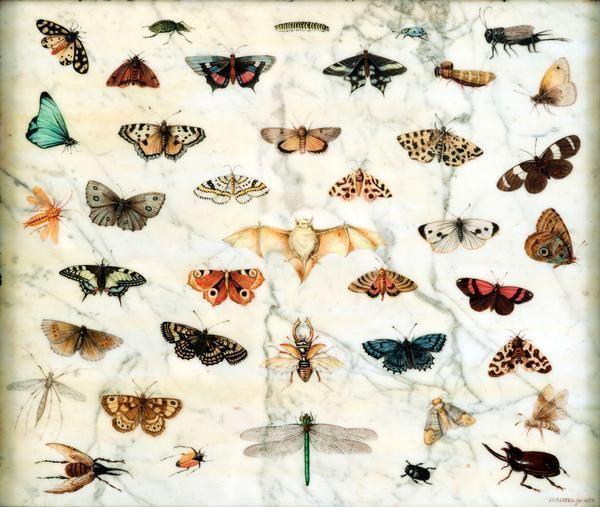jan_van_kessel_il_vecchio_studi_di_farfalle_e_altri_insetti_1659_olio_su_marmo_384x45x7_cm