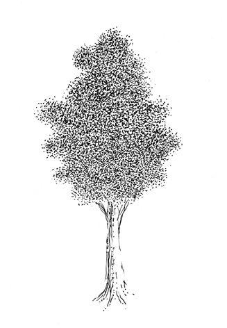 Un-autre-arbre