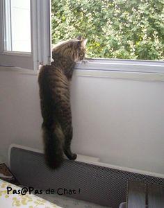 chat-fenêtre-pas@pasdechat
