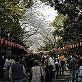 japon40