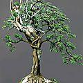 Tree-of-Life--27797