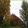 Feuillages automne 1110152
