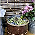 Faisselle de plantes grasses au coulis de petites ardoises polies