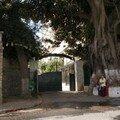 Alger-entrée des groupes laïques