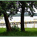 Lac 29061515