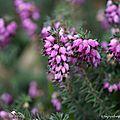 Fleurs du jardin de janvier