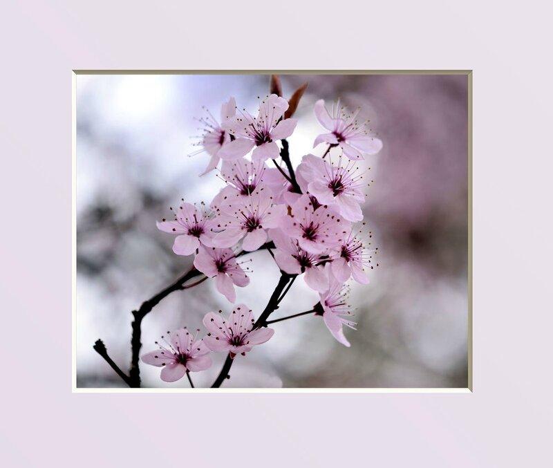 Cerisier-du-JAPON-a24031489