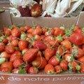 12 septembre - 10, 20, 100 fraisiers en toute gratuité....