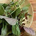 Jolies feuilles de shiso et plein de recettes inouïes ...