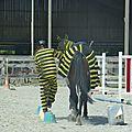 Jeux équestres manchots 2013 (216)