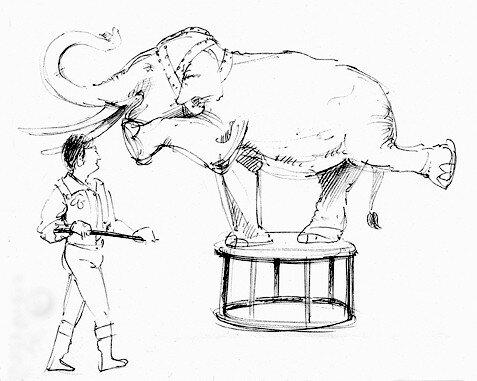 elephant au trait