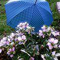 52 semaines en photo #6 parapluie