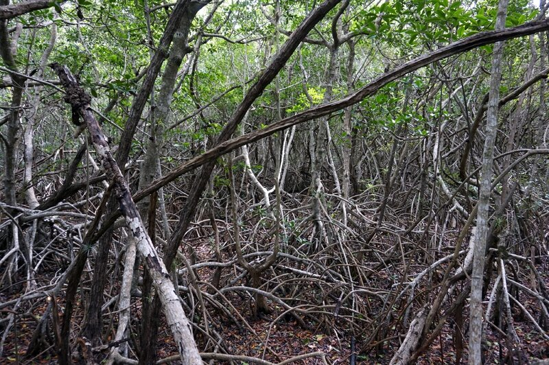 Everglades (49)
