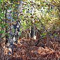 Feuillages automne 28111511