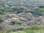 Waterberg forêt 2