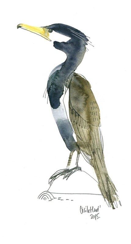 cormoranb