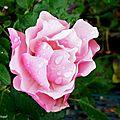 1-Fleurs de Léon 040917