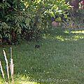 Un des parents sautille dans l'herbe (1)