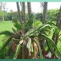 cactus tortueux