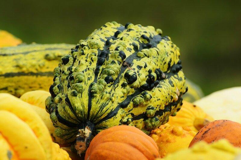 pumpkins-1642231_960_720