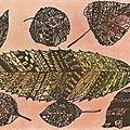 Feuilles d'automne par Sabine