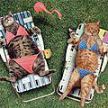Je veux un nouveau maillot de bain pour cet été !