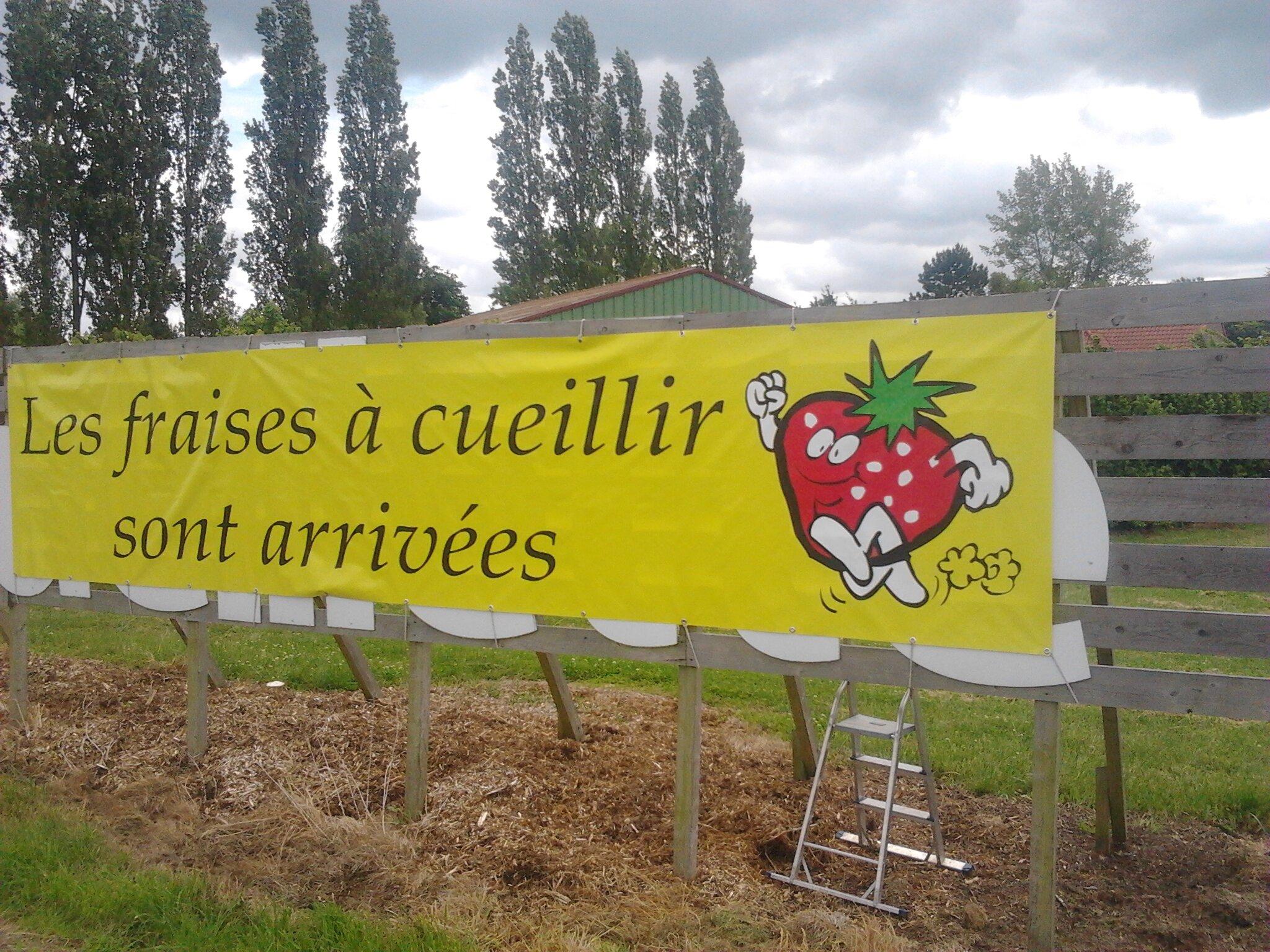 La cueillette gourmande ouvre pour la cueillette des fraises en ce debut juin avelin 500 - Comment cueillir des fraises ...