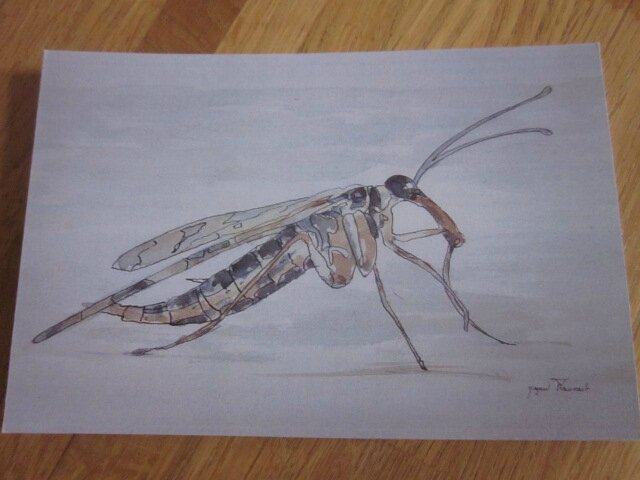 Insecte IV (2)