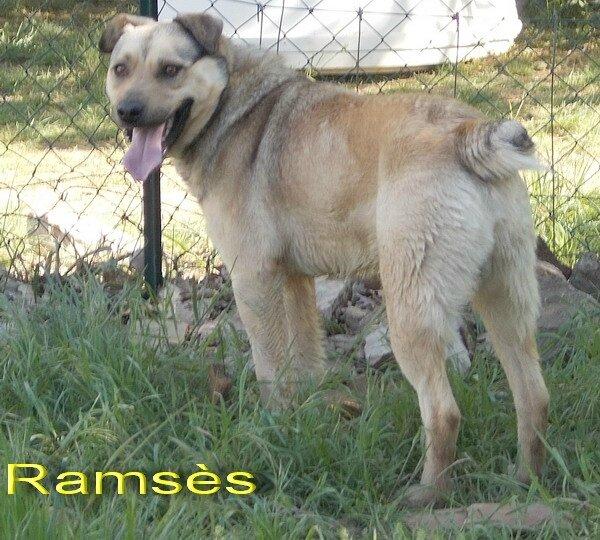 Ramsès 20170422 r