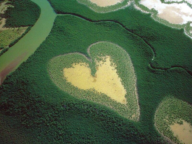 France - Nouvelle Caledonie - Mangrove