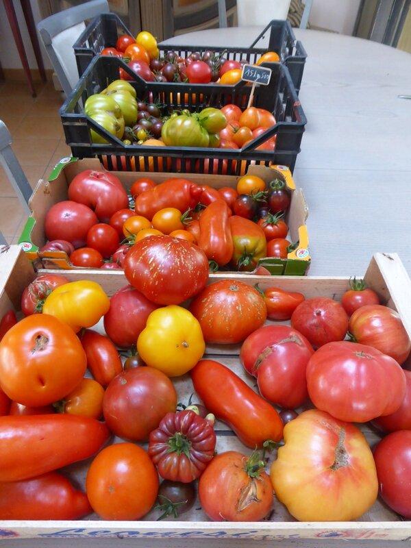 17-tomates du jour (4)