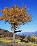 philippe_Ramette_la_voie_de_l_arbre