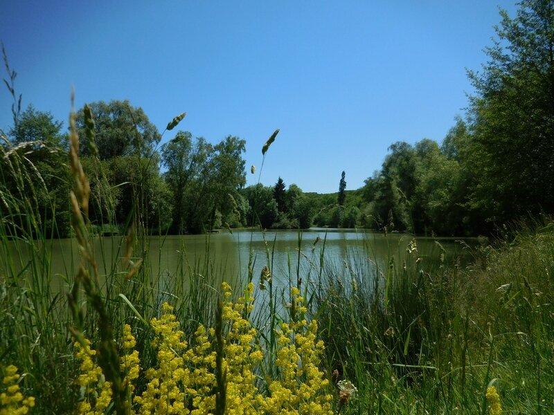 Bois Saint Pierre (2)