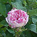 roseraie-du-mesnil-geoffroy-ermenouville-4