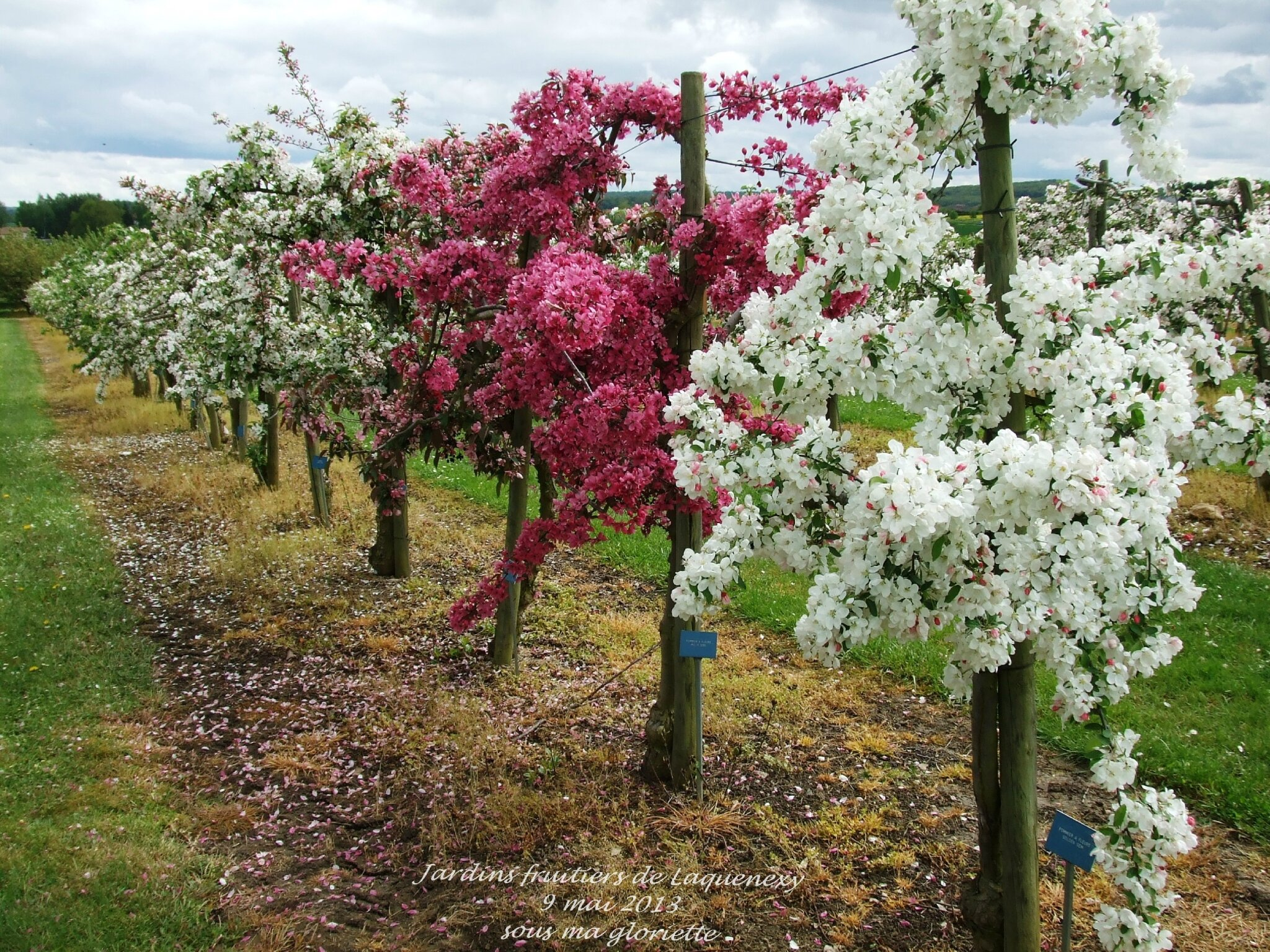 Les jardins fruitiers en fleurs laquenexy sous ma for Le jardin des fleurs strasbourg