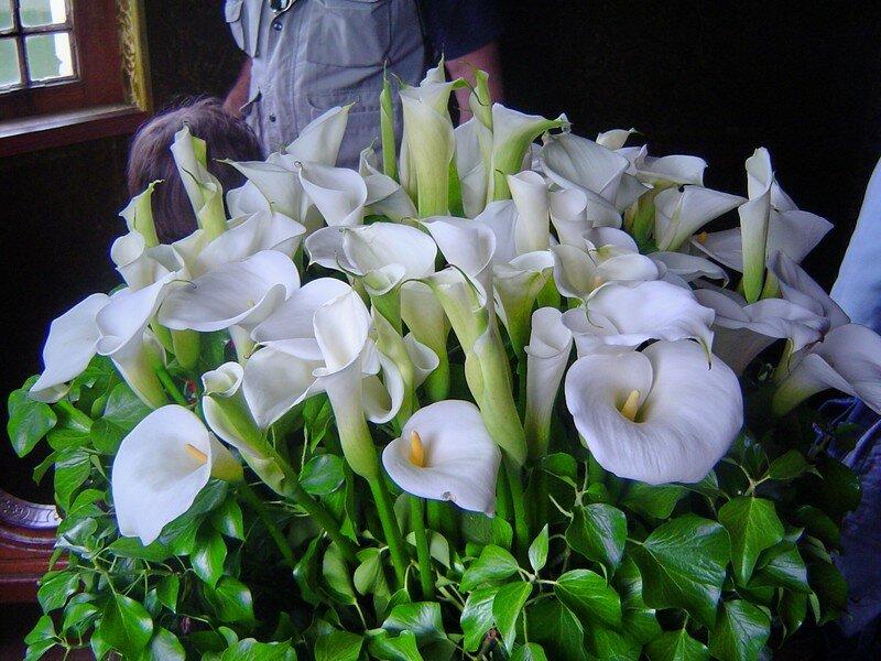 2 - Fleurs du château de Chenonceau