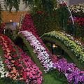 Floralies 098