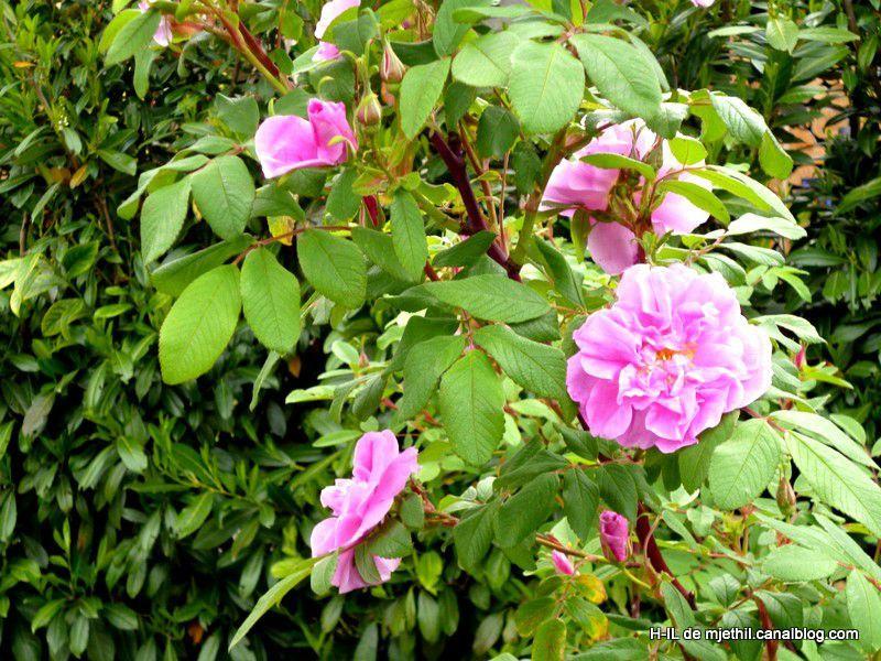 01-Jardin 8 mai 2012 001