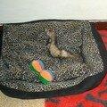 Zoé a nouveau a la maison (mars 2008)