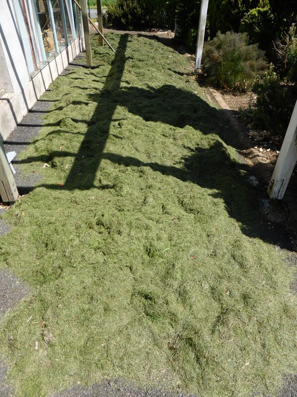 6-herbe à sécher (2)
