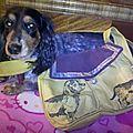 Le chien de Brittany et son sac Teckel